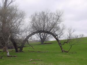 TreeArch1.jpg