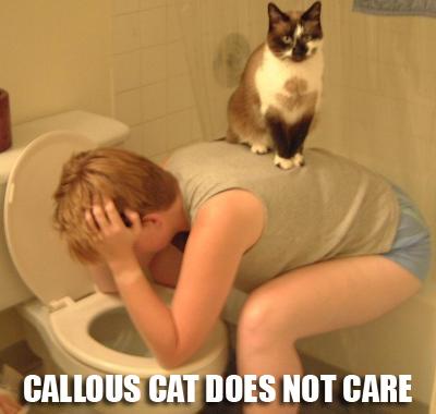 callouscatnq1.jpg