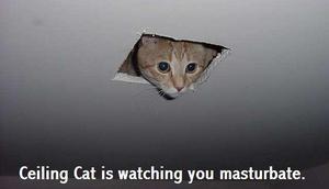ceilingcat8pb.jpg